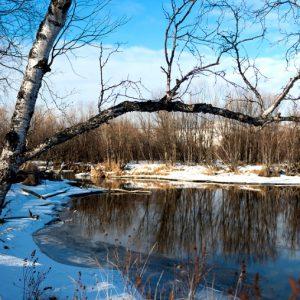 Горячие источники на Камчатке на территории Пиначевского месторождения